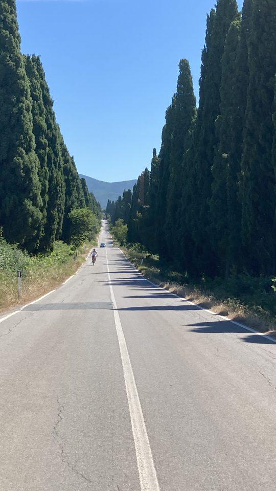 Aleja cyprysowa prowadząca doBolgheri ma prawie 5 kilometrów